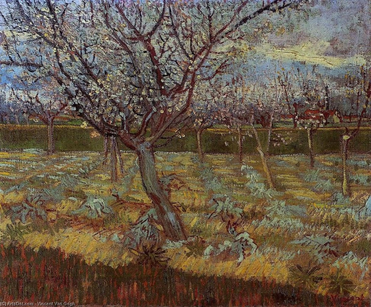 Apricot Trees in Blossom 2, 1888 by Vincent Van Gogh (1853-1890, Netherlands) | Museum Quality Copies Vincent Van Gogh | ArtsDot.com