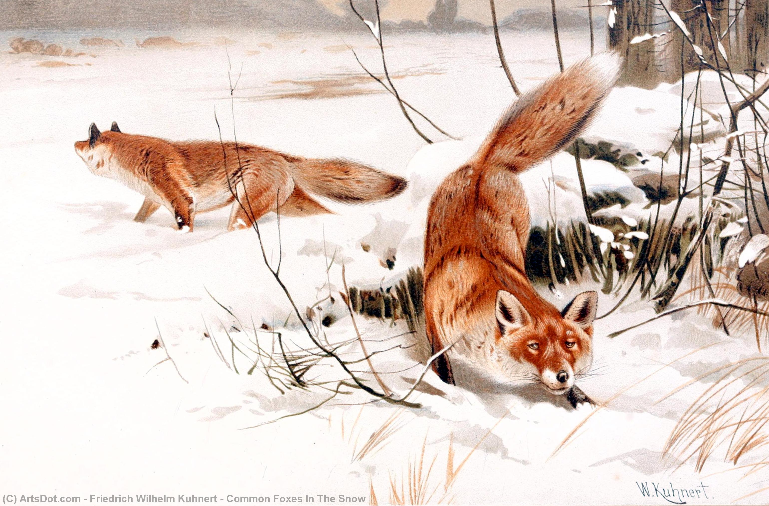 Common Foxes In The Snow by Friedrich Wilhelm Kuhnert (1865-1926, Poland) | Painting Copy | ArtsDot.com