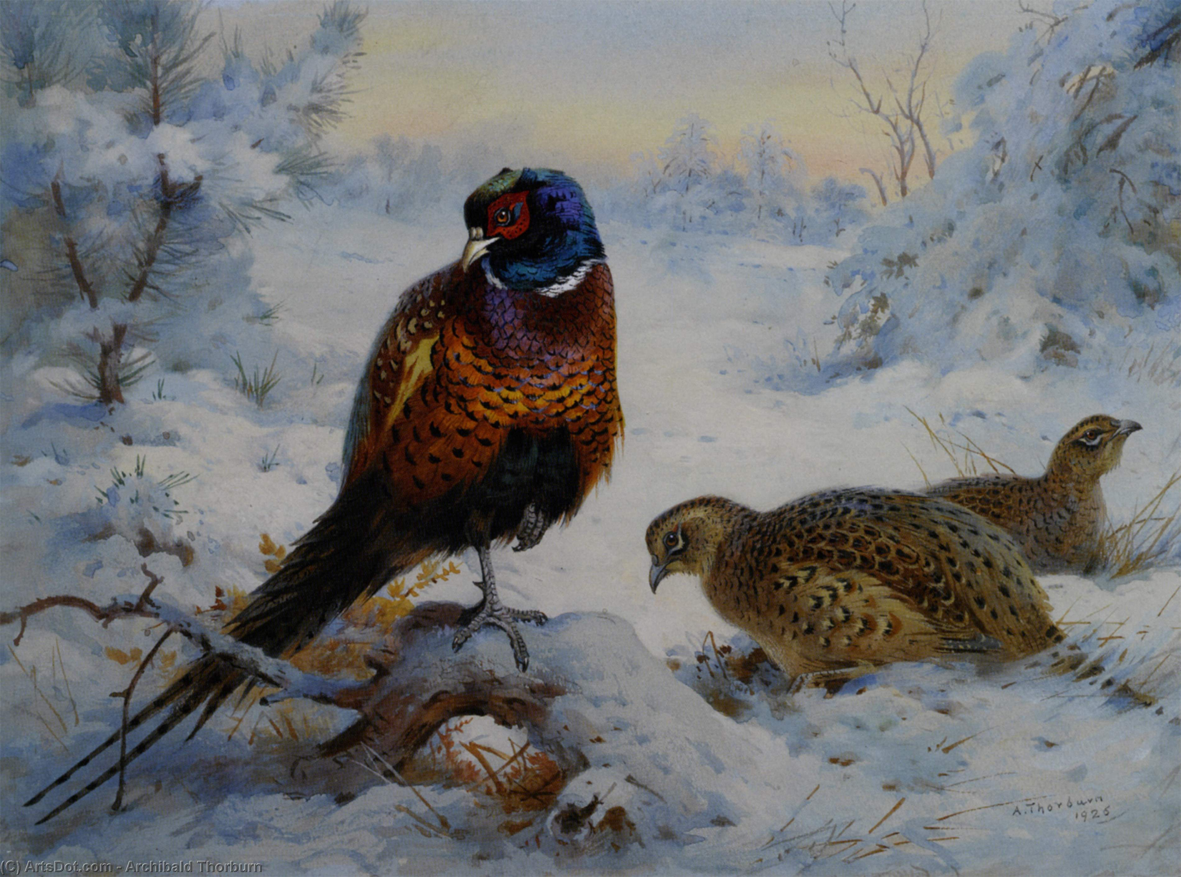 Cock And Hen Pheasant In Winter, Watercolour by Archibald Thorburn (1860-1935, United Kingdom)
