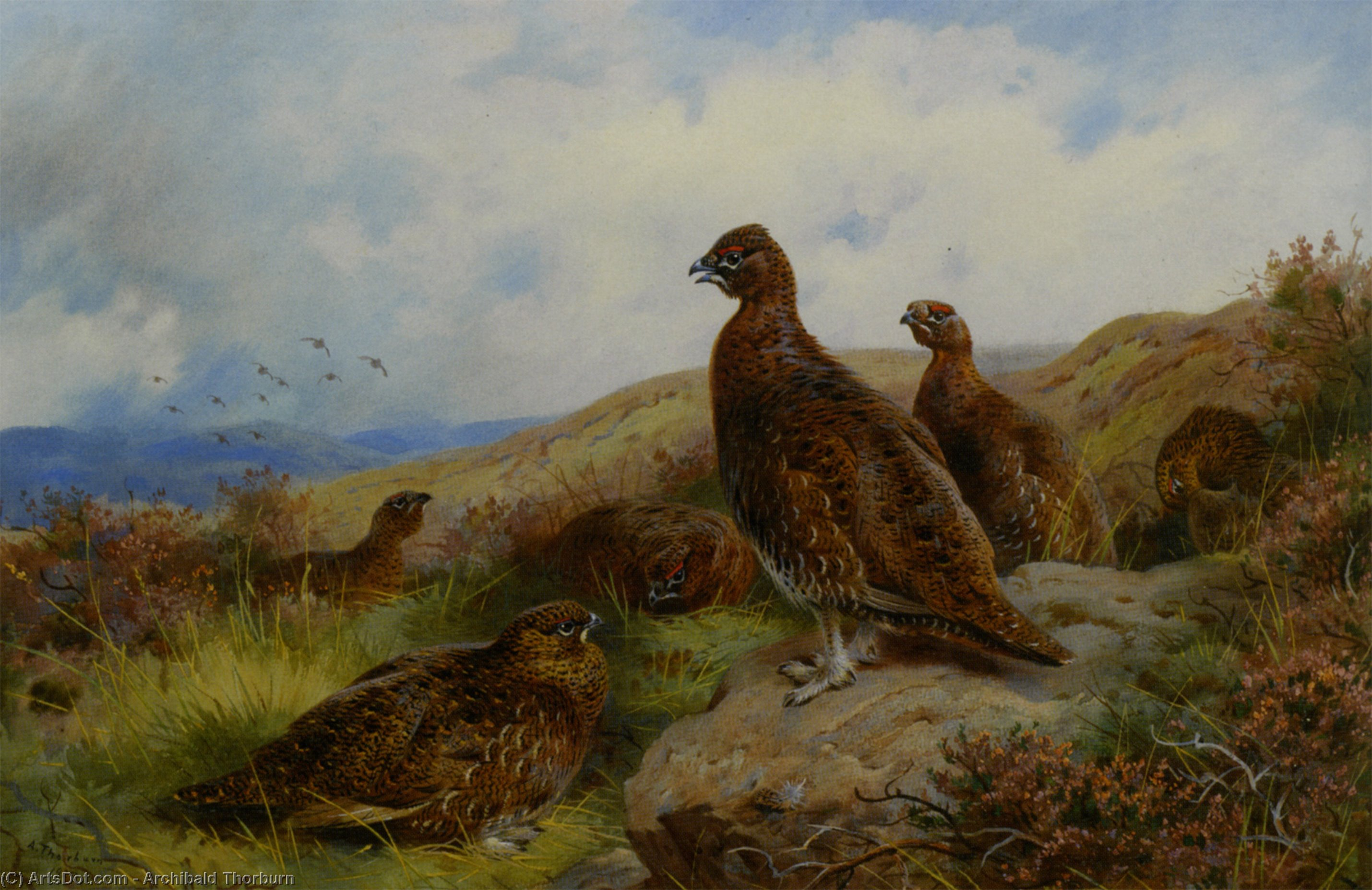 Red Grouse Packing, Watercolour by Archibald Thorburn (1860-1935, United Kingdom)
