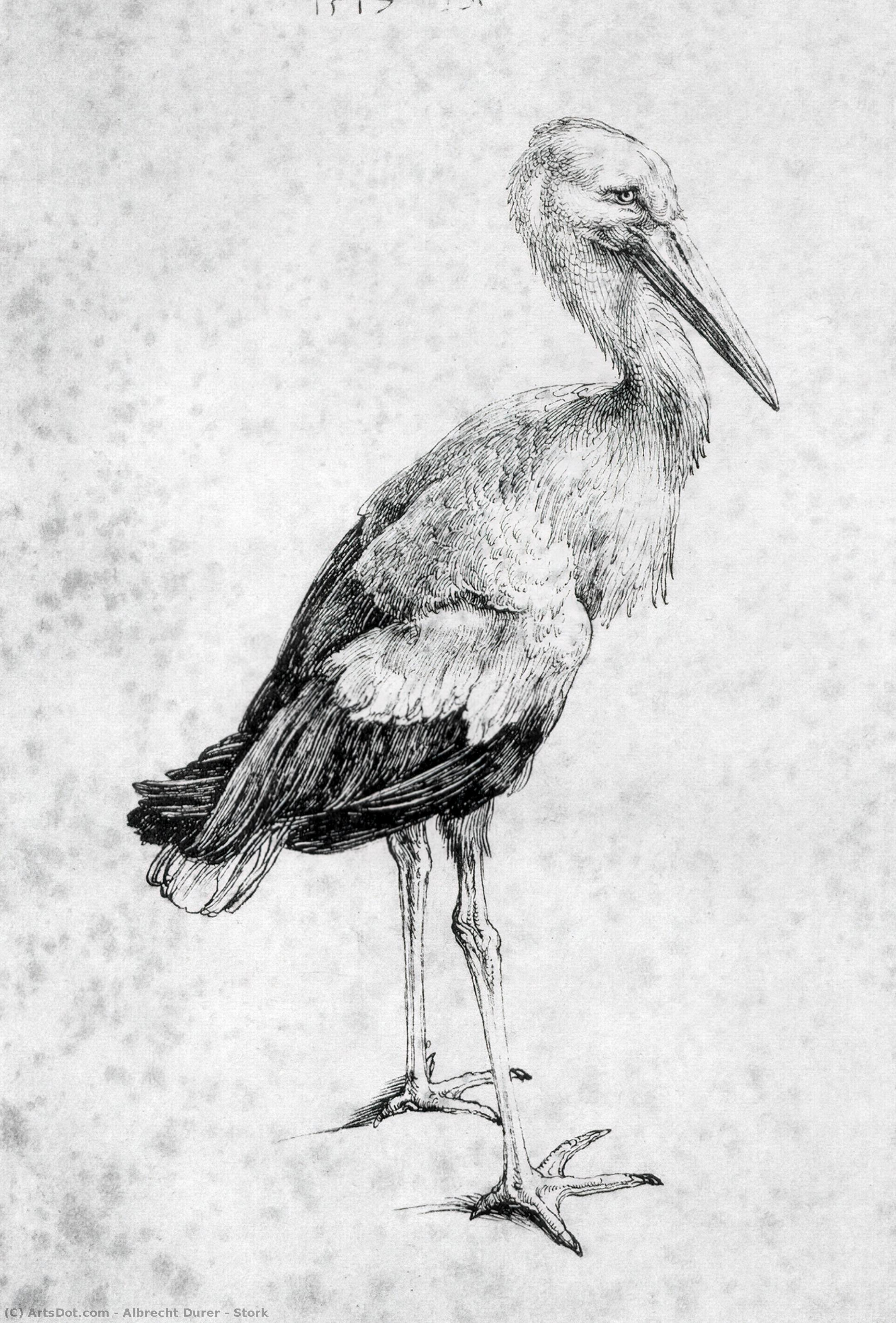 Stork by Albrecht Durer (1471-1528, Italy) | Paintings Reproductions Albrecht Durer | ArtsDot.com