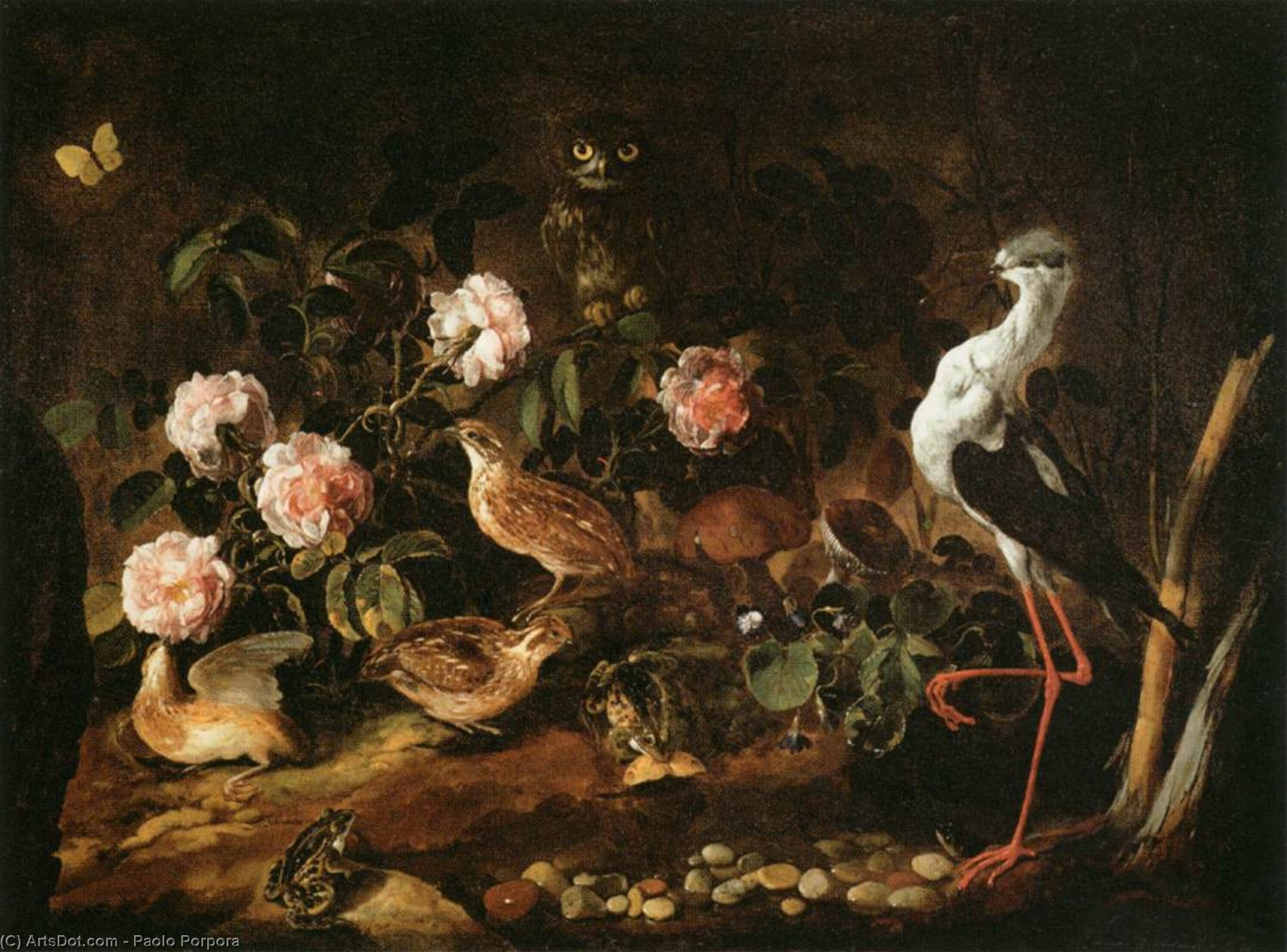 Still-Life with an Owl and an Ibis, Oil On Canvas by Paolo Porpora (1617-1673, Italy)
