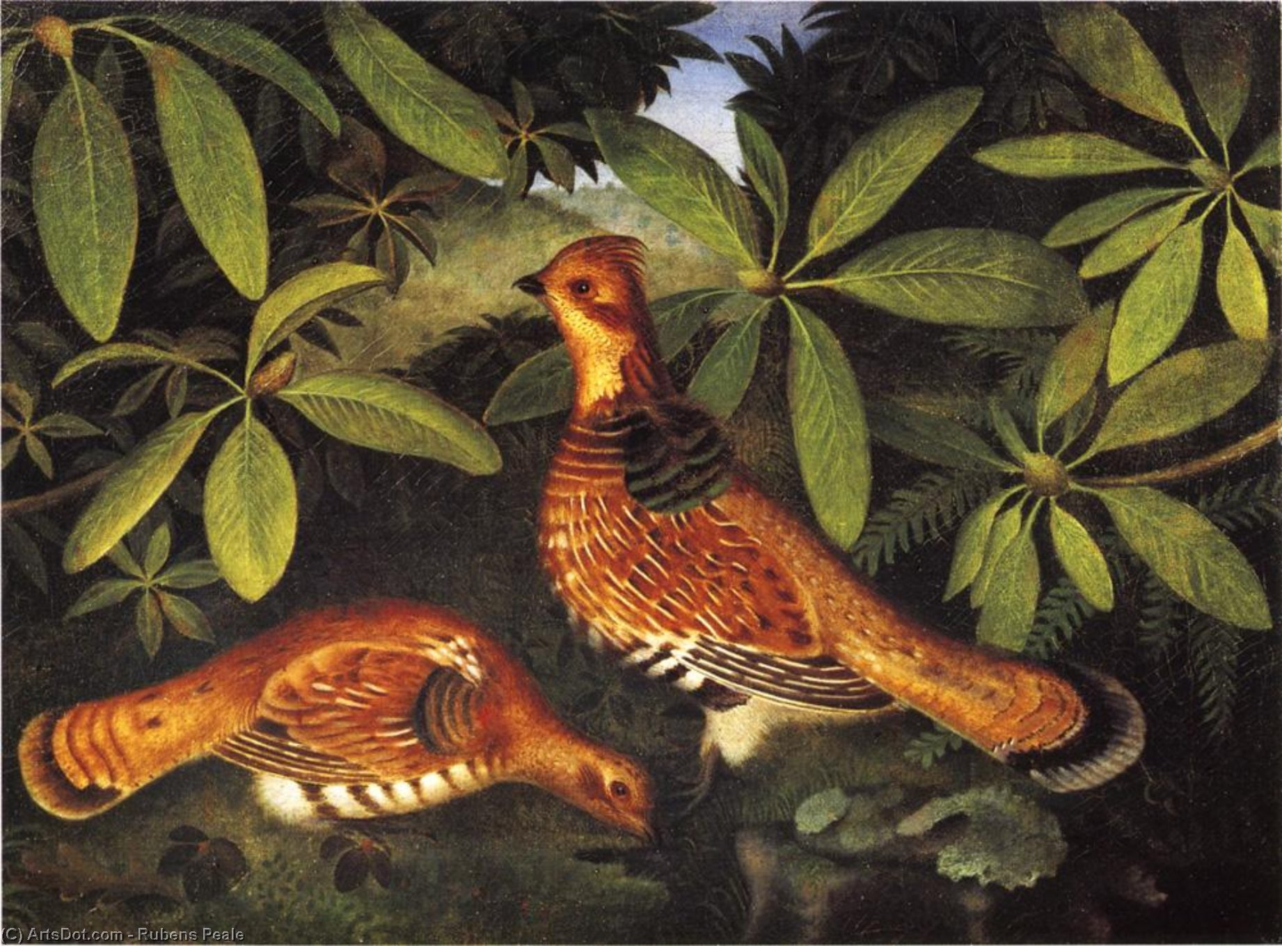 Two Ruffed Grouse, Oil On Canvas by Rubens Peale (1784-1865, United States)
