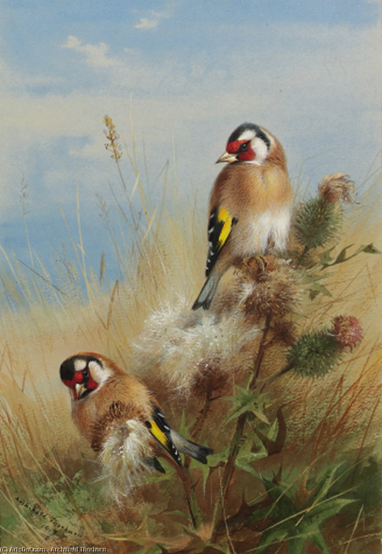 Goldfinches Among Thistles by Archibald Thorburn (1860-1935, United Kingdom) | Museum Art Reproductions | ArtsDot.com