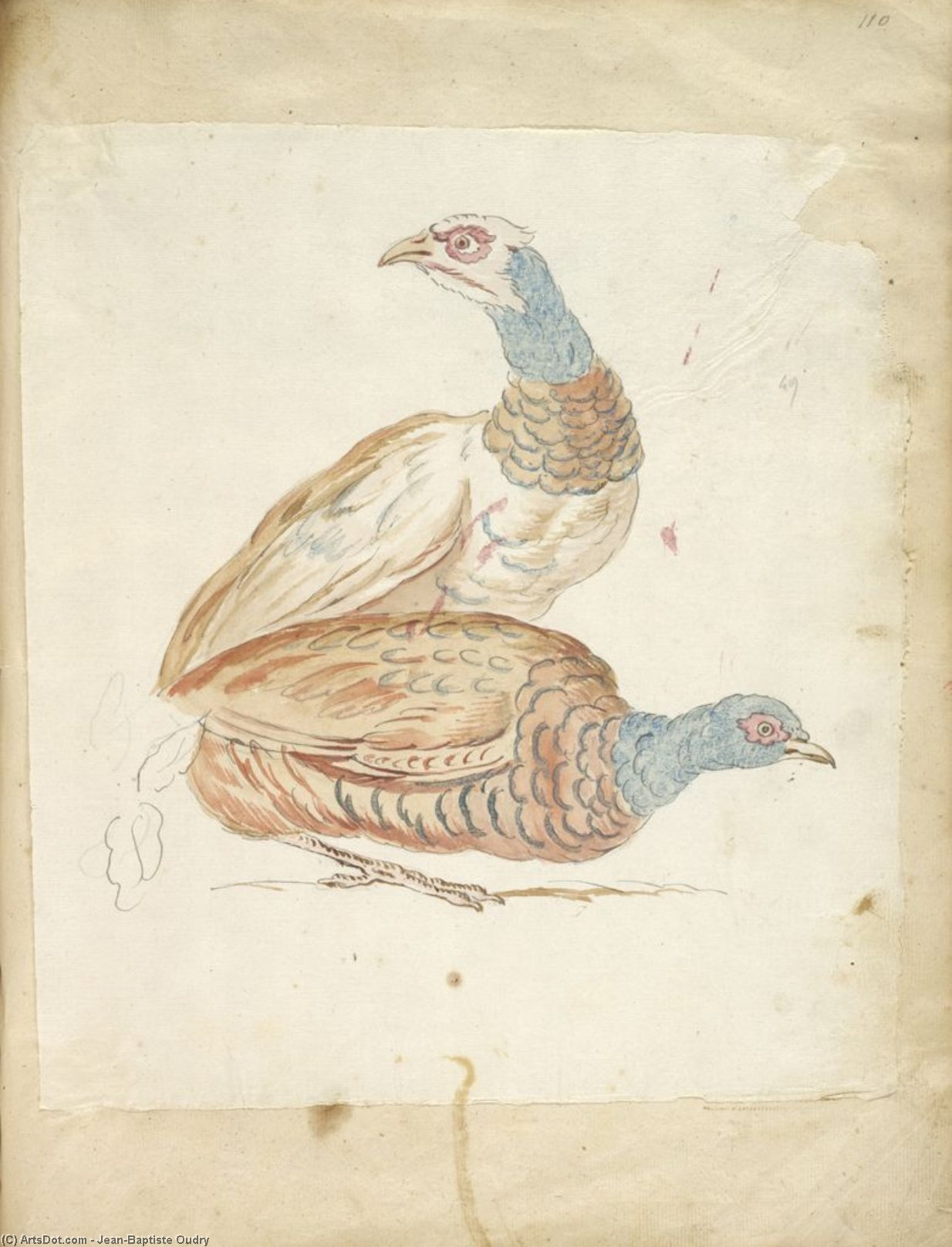 Two Pheasants by Jean-Baptiste Oudry (1686-1755, France) | Oil Painting | ArtsDot.com