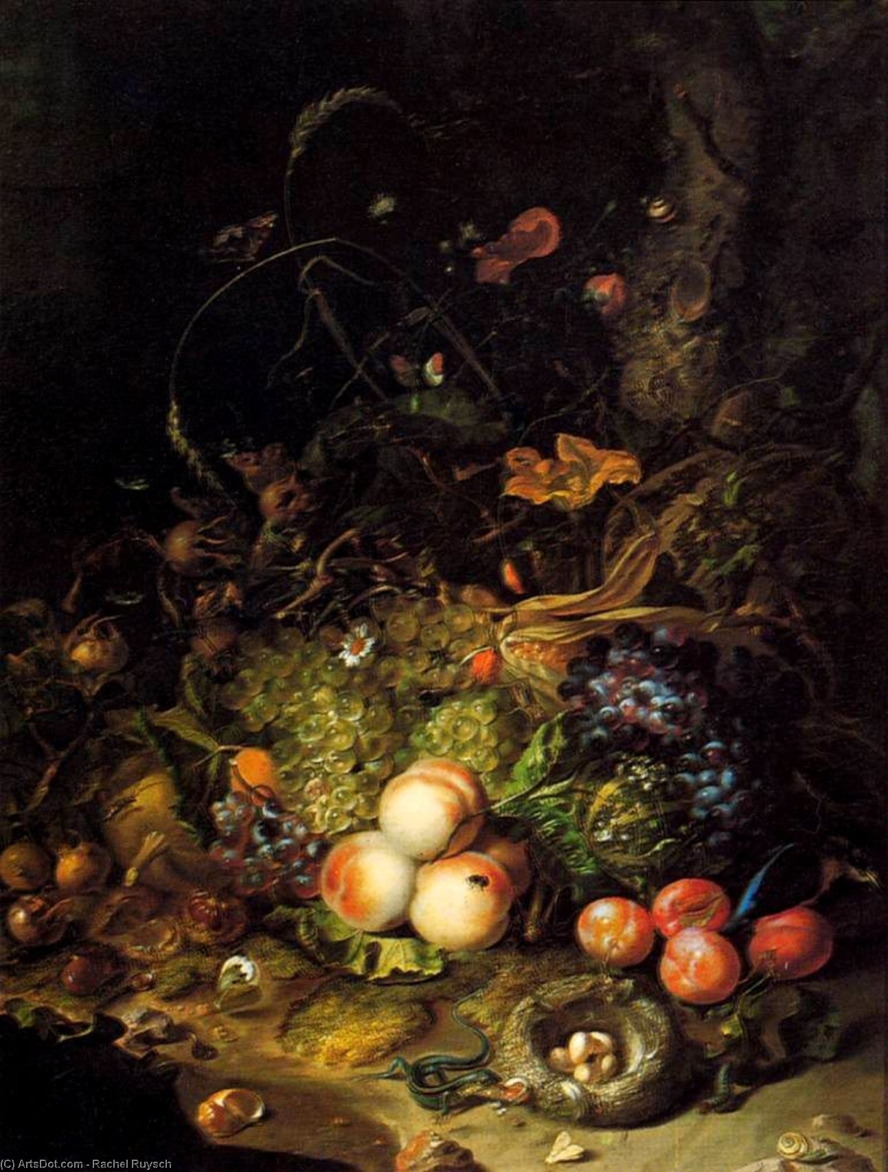 Flowers, Fruit, and Insects, 1716 by Rachel Ruysch (1664-1750, Netherlands) | Art Reproduction | ArtsDot.com