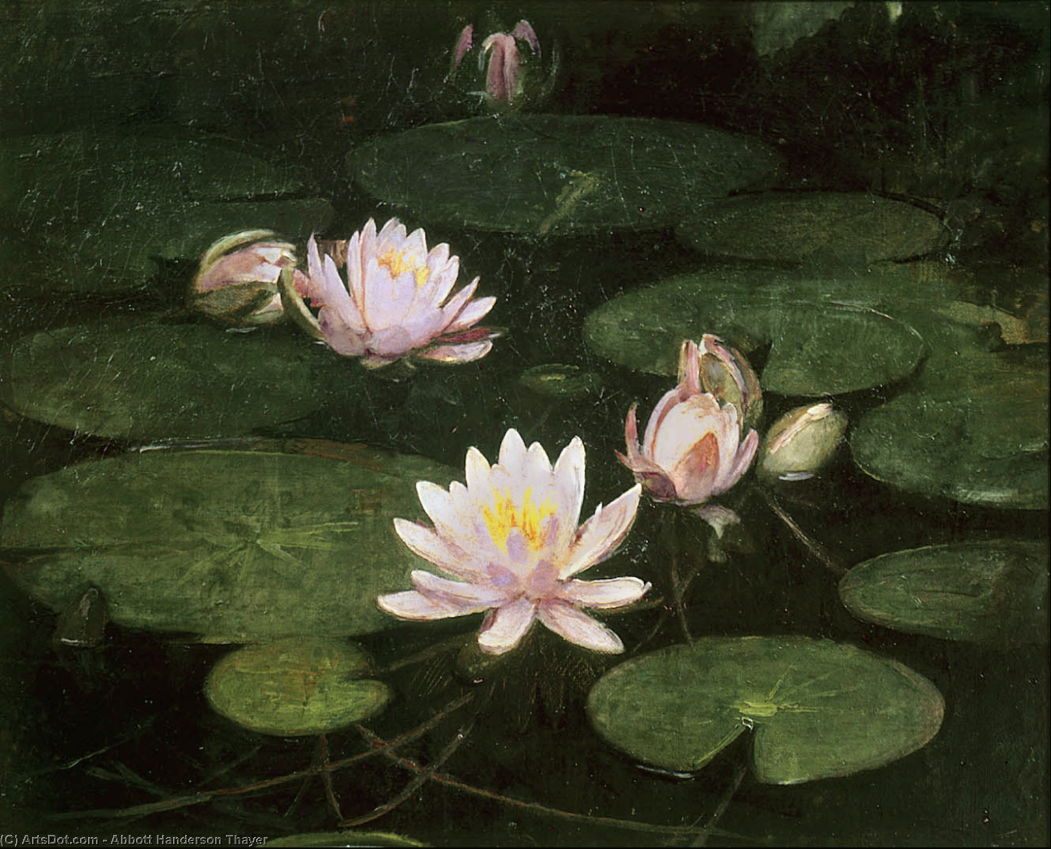 Waterlilies, 1884 by Abbott Handerson Thayer (1849-1921, United States)