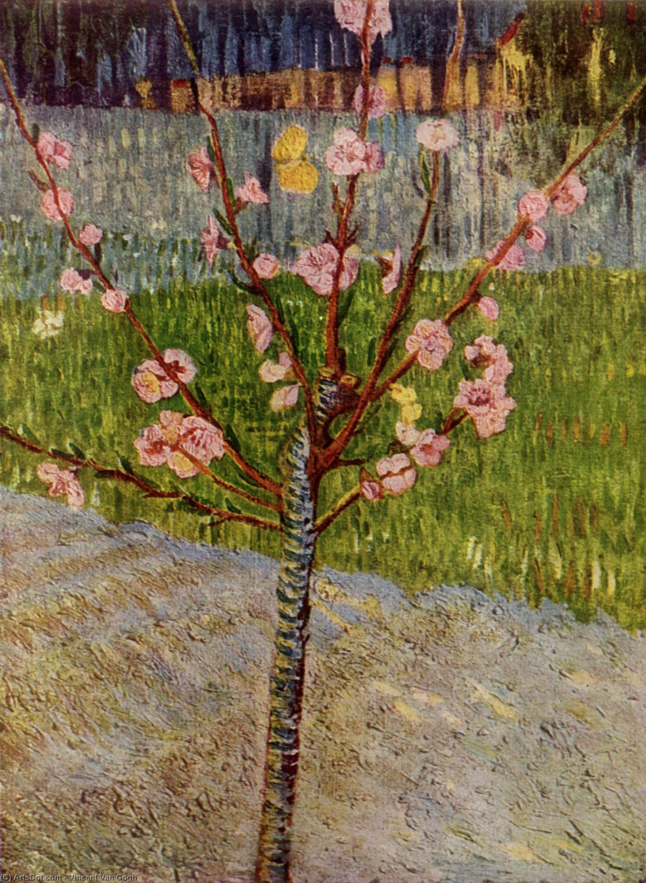 Order Paintings Reproductions | Almond Tree in Blossom, 1888 by Vincent Van Gogh (1853-1890, Netherlands) | ArtsDot.com