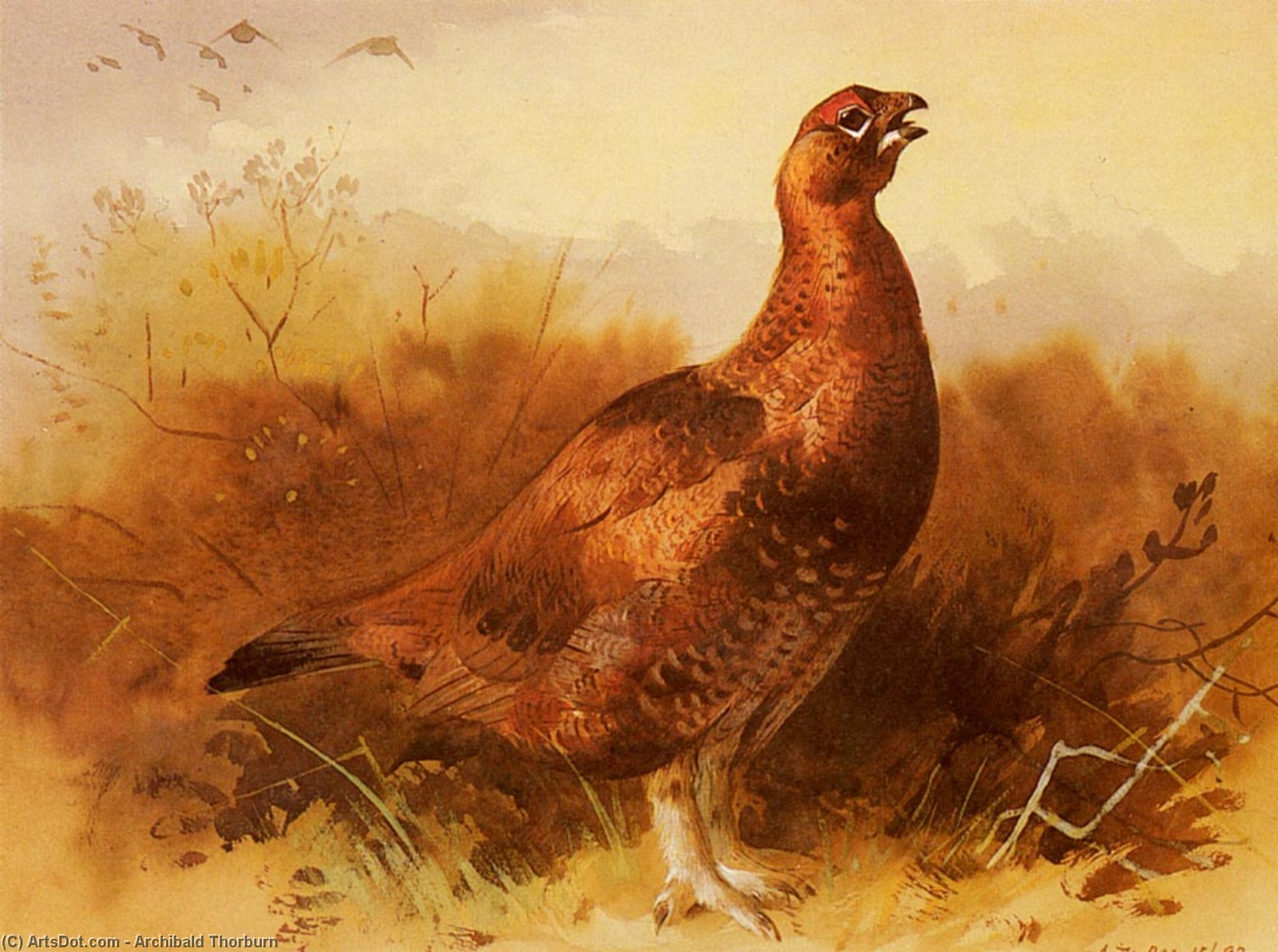 Cock Grouse, Watercolour by Archibald Thorburn (1860-1935, United Kingdom)