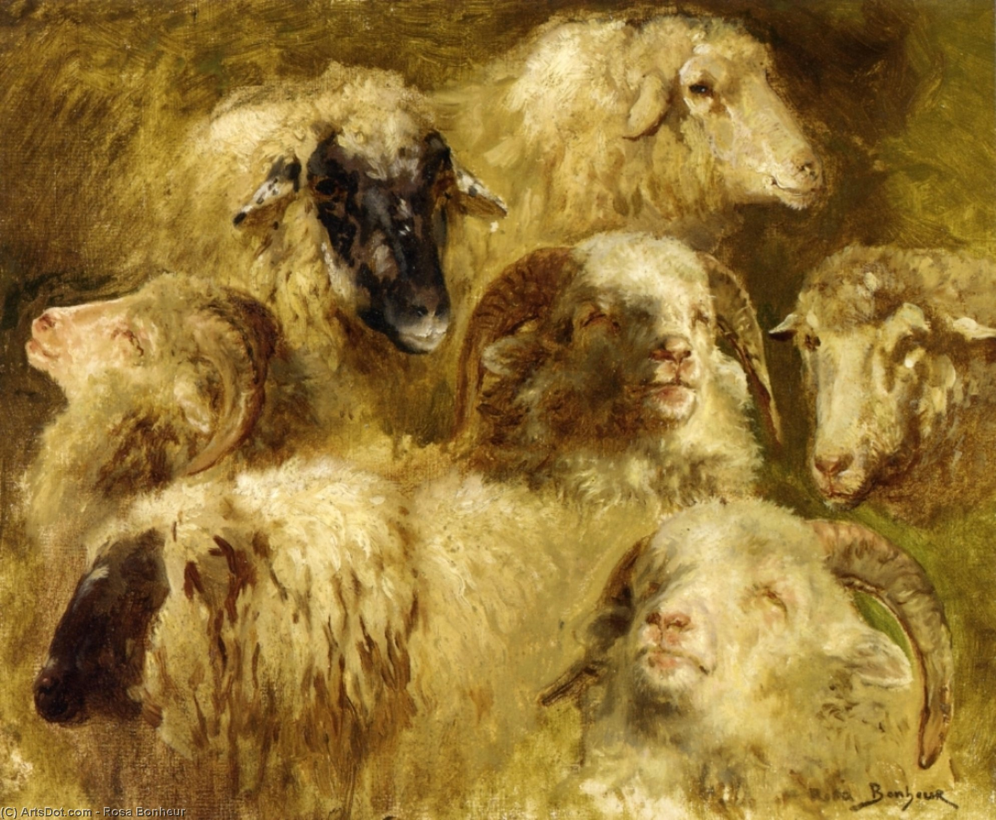 Heads of Ewes and Rams, Oil On Canvas by Rosa Bonheur (1822-1899, France)