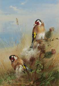 Archibald Thorburn - Goldfinches Among Thistles