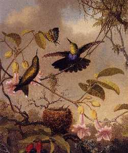 Martin Johnson Heade - Fort-Tailed Woodnymph