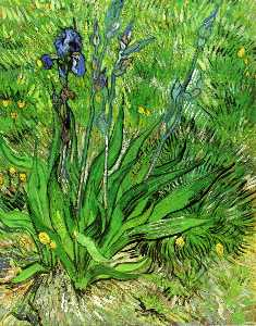 Vincent Van Gogh - The Iris