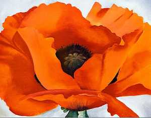 Georgia Totto O'Keeffe - Red Poppy