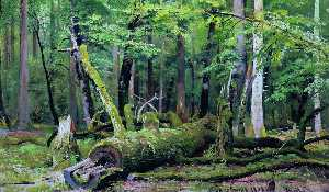 Ivan Ivanovich Shishkin - Cut down oak in the Bialo..