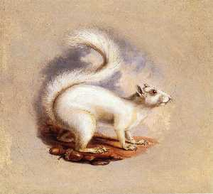 Titian Ramsey Peale Ii - White Squirrel