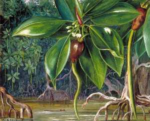 Marianne North - A Mangrove Swamp in Saraw..