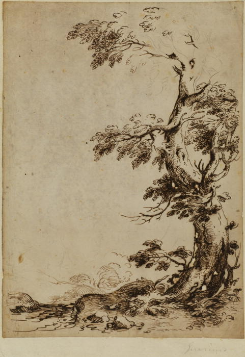 Landscape with tree in the foreground, Drawing by Guercino (Barbieri, Giovanni Francesco) (1591-1666, Italy)