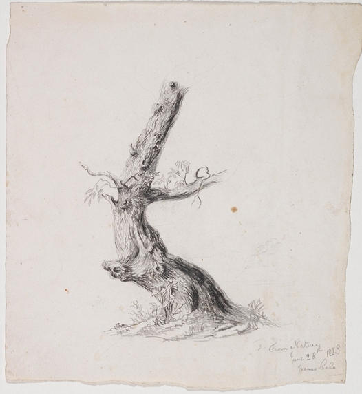 Gnarled Tree Trunk with Lea, Illustration by Thomas Cole (1801-1848, United Kingdom)