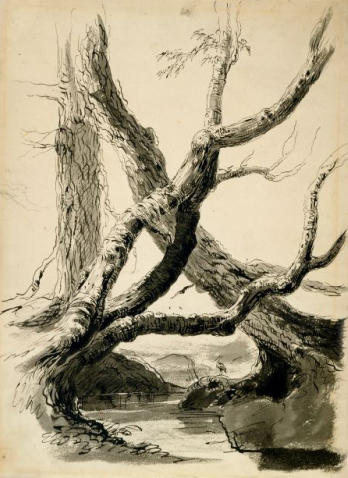 Sketch of Tree Trunks, Oil by Thomas Cole (1801-1848, United Kingdom)