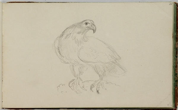 Study, Bird, Engraving by Thomas Cole (1801-1848, United Kingdom)