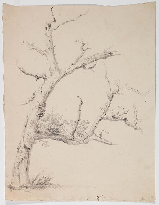 Study, Tree 10, Oil by Thomas Cole (1801-1848, United Kingdom)