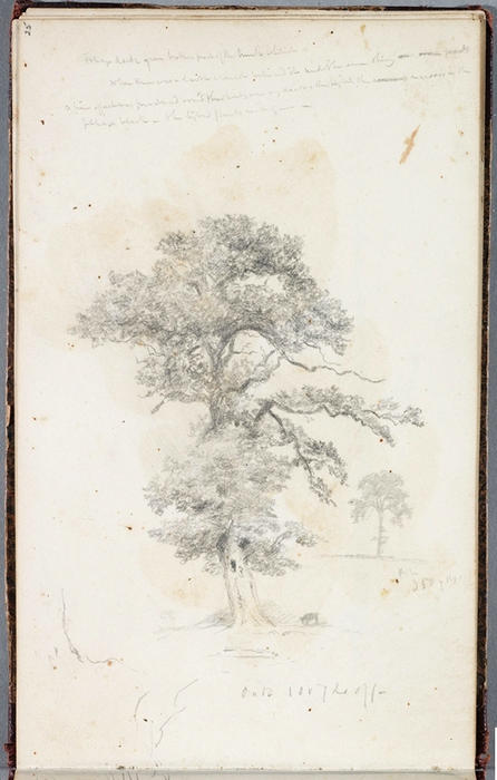 Study, Tree 7, Oil by Thomas Cole  (order Fine Art Print on canvas Thomas Cole)