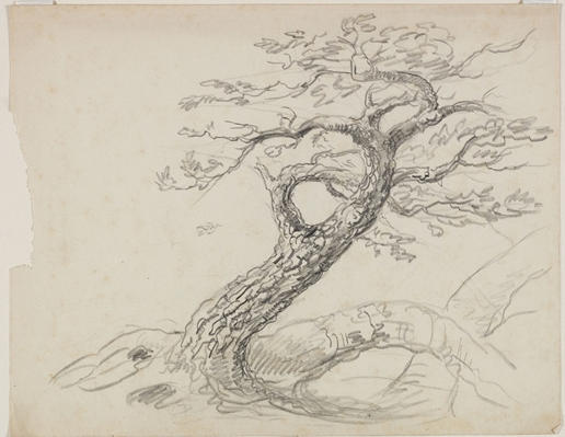 Tree4, Engraving by Thomas Cole (1801-1848, United Kingdom)
