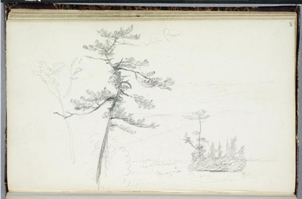 White Pine, Niagara, Engraving by Thomas Cole (1801-1848, United Kingdom)