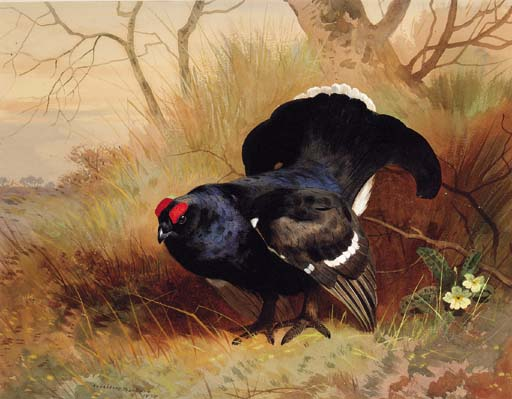 A Blackcock In A Woodland Clearing, Watercolour by Archibald Thorburn (1860-1935, United Kingdom)