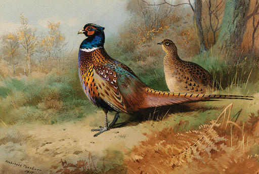 A Cock And Hen Pheasant In A Clearing, Watercolour by Archibald Thorburn (1860-1935, United Kingdom)