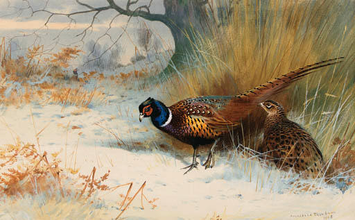 A Cock And Hen Pheasant In Winter, On The Edge Of The Covert, Watercolour by Archibald Thorburn (1860-1935, United Kingdom)