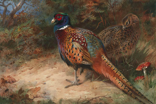A Cock And Hen Pheasant, Watercolour by Archibald Thorburn (1860-1935, United Kingdom)