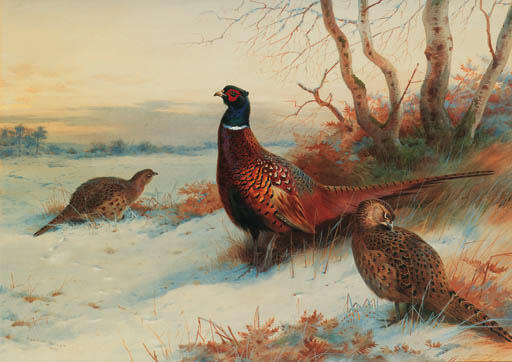 A Cock And Two Hen Pheasant In A Winter Landscape, Watercolour by Archibald Thorburn (1860-1935, United Kingdom)