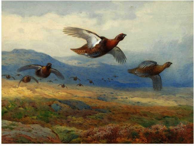 A Covey Of Grouse In Flight, Watercolour by Archibald Thorburn (1860-1935, United Kingdom)