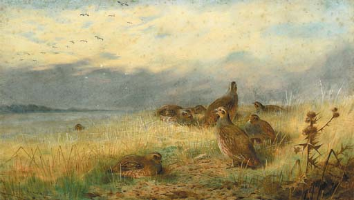 A Covey Of Partridge In The Stubble, With Lapwings Flying Overhead, Watercolour by Archibald Thorburn (1860-1935, United Kingdom)