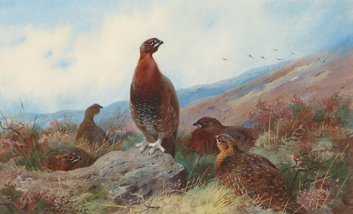 A Covey Of Red Grouse On A Moor, Watercolour by Archibald Thorburn (1860-1935, United Kingdom)