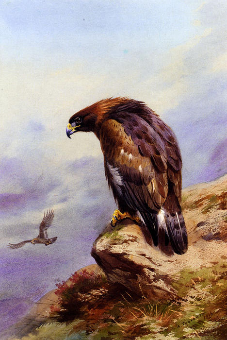 A Golden Eagle, Watercolour by Archibald Thorburn (1860-1935, United Kingdom)