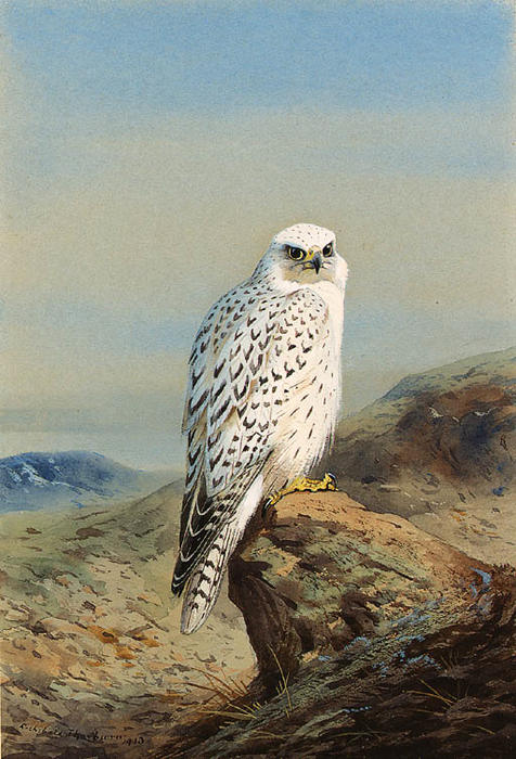 A Greenland Gyr Falcon In A Mountainous Landscape, Watercolour by Archibald Thorburn  (order Fine Art Print on canvas Archibald Thorburn)