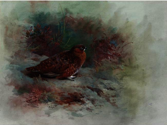 A Grouse, Watercolour by Archibald Thorburn (1860-1935, United Kingdom)