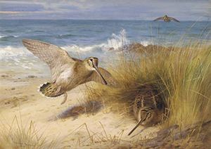 Archibald Thorburn - A Haven Of Rest. Woodcock On The Shore