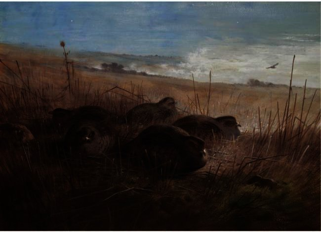 A Moonlight Night In The Open, Grey Partridges, Watercolour by Archibald Thorburn (1860-1935, United Kingdom)