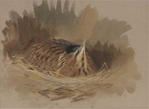 A Nesting Bittern, Watercolour by Archibald Thorburn (1860-1935, United Kingdom)