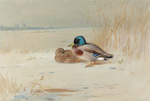 A Pair Of Mallards, On The Edge Of A Lake, Watercolour by Archibald Thorburn (1860-1935, United Kingdom)