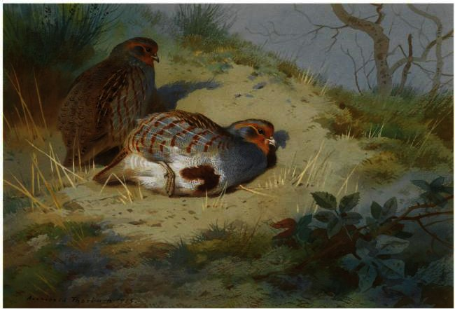 A Pair Of Partridges On A Sandy Bank, Watercolour by Archibald Thorburn (1860-1935, United Kingdom)
