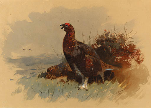 A Pair Of Red Grouse Among Heather, Watercolour by Archibald Thorburn (1860-1935, United Kingdom)