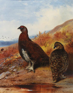 Archibald Thorburn - A Pair Of Red Grouse At The Water-s Edge, In Moorland