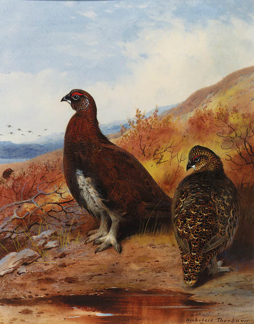 A Pair Of Red Grouse At The Water's Edge, In Moorland, Watercolour by Archibald Thorburn (1860-1935, United Kingdom)