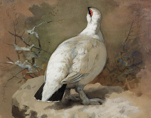 Archibald Thorburn - A Ptarmigan In Winter