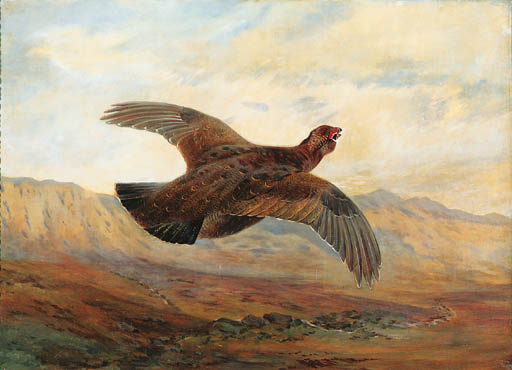 A Red Grouse In Flight Above Moorland, Watercolour by Archibald Thorburn (1860-1935, United Kingdom)